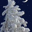 Fir under snow against the night sky with the moon. — Stock Photo