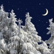 Firs under snow against the night sky with the moon. — Stock Photo #18913297
