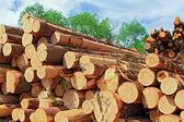 木材の準備 — ストック写真