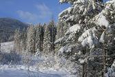 Winter in Bergen — Stockfoto