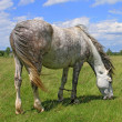 Horse on a summer pasture — Stock Photo #20201353