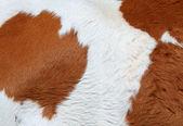 片段的一头母牛的皮肤 — 图库照片