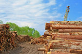Wood preparation — Foto Stock