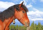 Cabeza de un caballo contra el cielo — Foto de Stock