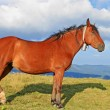 Horse on a summer pasture — Stock Photo #21200163
