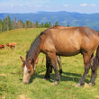 Horses on a summer pasture — Stock Photo #21472795