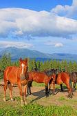 Hästar på en fäbod — Stockfoto