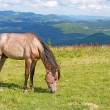 Horse on a summer pasture — Stock Photo #21609737