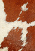 Fragment of a skin of a cow. — Stock Photo