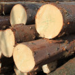 Wood preparation — Stockfoto #22163833