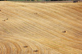 View of after harvest fields, Toscany, Italy — Stock Photo