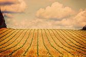 キャンティ地方のトスカーナの丘のビンテージ ビュー — ストック写真