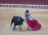 Stierenvechter paco hidalgo — Stockfoto