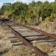 Stock Photo: Railroad tracks in floridwilderness