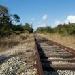 Постер, плакат: Railroad tracks in wilderness