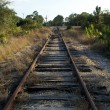 Stock Photo: Railroad tracks in florida