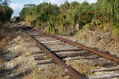 Railroad tracks in florida wilderness — Stock Photo