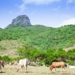 Dajianshan mountain ranch. kenting national park in taiwan - ストック写真