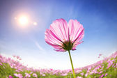 Beautiful daisies on the sunlight background — Stock Photo