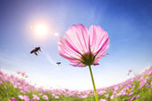 Bee and pink daisies on the sunlight background — Stock Photo