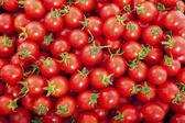 Grupa świeżych pomidorów — Zdjęcie stockowe