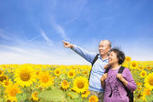 Happy senior couple standing in the sunflower garden — ストック写真