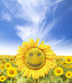 Viso sorridente di girasole in estate — Foto Stock