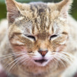 Close up face of cat — Stockfoto