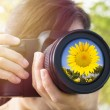 Young Woman taking photo with sunflower — Stock Photo