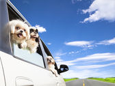 Dog's family traveling in the car — Stock Photo