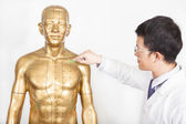 Chinese medicine doctor teaches acupoint on human model — Stock Photo