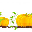 Stock Vector: Pumpkins grow in a garden
