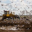 Landfill rubbish bulldozers processing garbage — Stock Photo