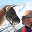 The man with the lama on the mountain — Stock Photo