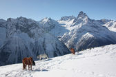 Winter landscape in mountains with the horses — Stock Photo