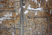 Brown painted weathered wood texture — Stock Photo