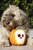 Dog halloween — Stock Photo