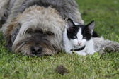 Dog and cat together on grass — Stock Photo