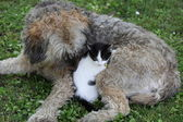Friendship between cat and dog — Stock Photo