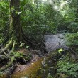 Mulu National Park - Stock Photo