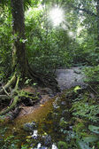 Mulu National Park — Stockfoto