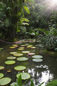 Tropical garden with giant waterlily — Stock Photo