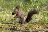 Squirrel in a park — Stock Photo