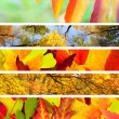 Stock Photo: Set of Different Autumn