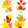 Composition Set of Different Autumn Leaves / isolated — Stock Photo