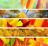 Set of Different Autumn — Stock Photo