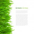 Fresh Green Grass with Drops Dew / isolated on white — Stock Photo