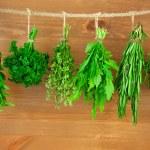 coleta de ervas frescas / estilo vintage — Foto Stock