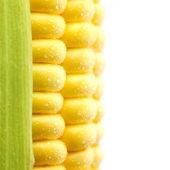 Granos de maíz maduro con gotas de agua / aislado / ma extrema — Foto de Stock