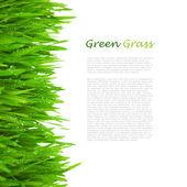 La hierba verde fresca con gotas de rocío / aislado en blanco — Foto de Stock